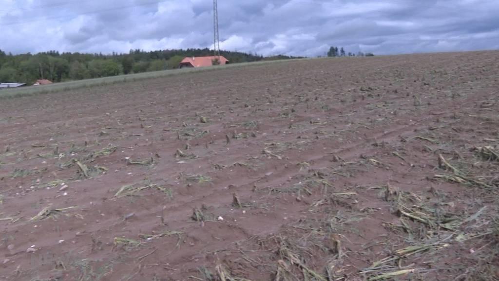 Massive Gewitterschäden: Hagel zerstört bei Bauern Felder und Ernten