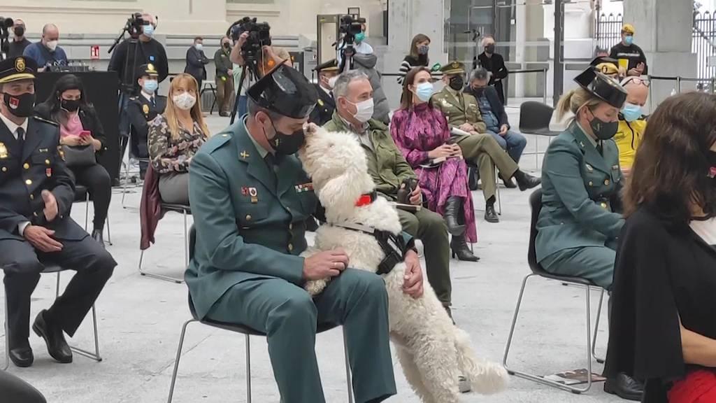 Madrid: Pensionierte Polizeihunde zur Adoption freigegeben