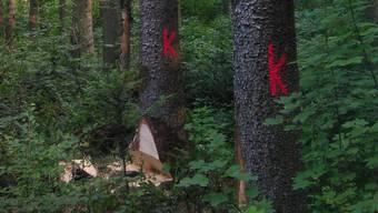 Das rote «K» heisst Käferbefall und der Baum wird gefällt.