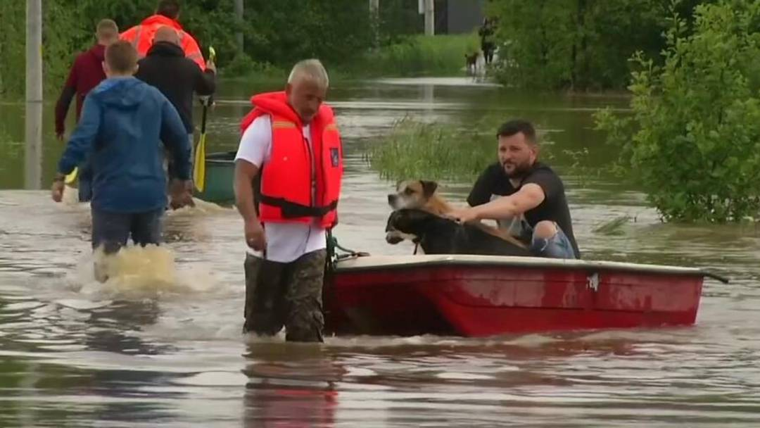 Tierheim in Polen evakuiert