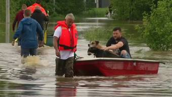 Wegen Überschwemmungen: 55 Hunde und eine Katze aus polnischem Tierheim evakuiert