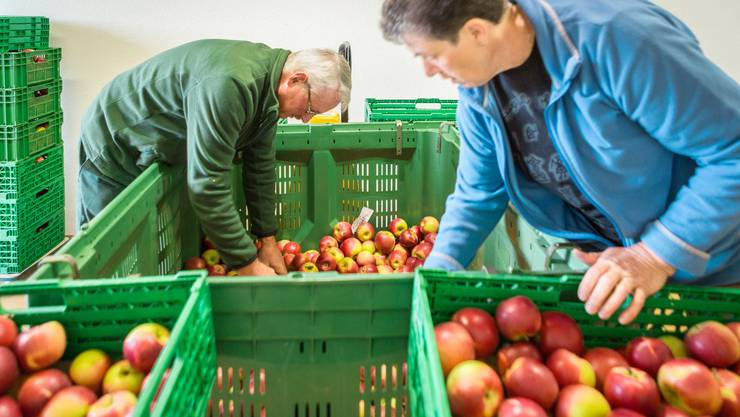 """Die Apfelplantage der Familie Suter ist ein """"Archivgarten"""" von Pro Specie Rara."""