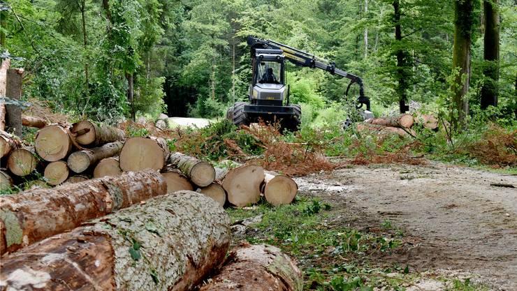 Im Möhliner Wald wurden diese Woche vom Borkenkäfer befallene Bäume gefällt. Nadine Böni