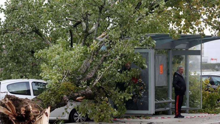 Die heftigen Winde haben in Bayonne, im Südwesten Frankreichs, einen Baum entwurzelt.