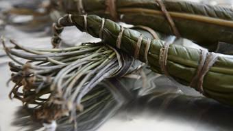 Zuerst wurde die Droge in Pflanzenform sichergestellt (siehe Bild), später sind Pakete mit gefriergetrocknetem Khat abgefangen worden. (Archivbild)