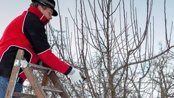 Nicht jeder Baum wird zur gleichen Jahreszeit geschnitten.AZ Archiv/psi