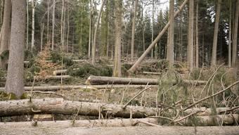 Waldschäden Burglind Aesch