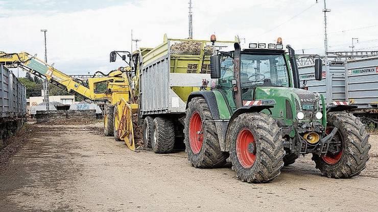 In Lenzburg werden in drei Wochen 20 Tonnen Rüben verladen.