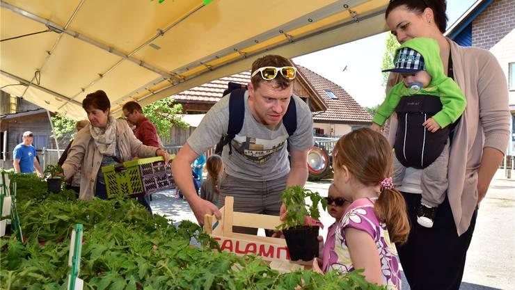«Black Cherry, Datterino oder Peruanische Wildtomate?» Die Auswahl am Tomatenstand im Buechehof löst Diskussionen aus.