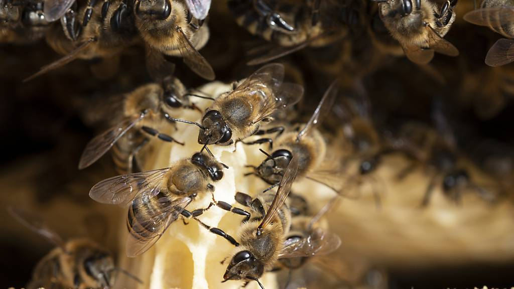 Bienen im Wert von 10'000 Franken gestohlen