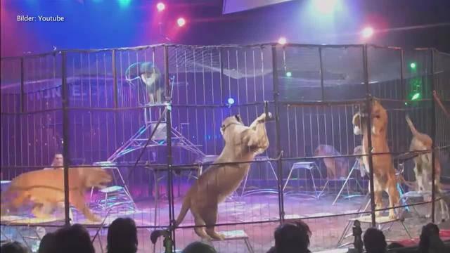 Royal wegen Tierquälerei angeklagt