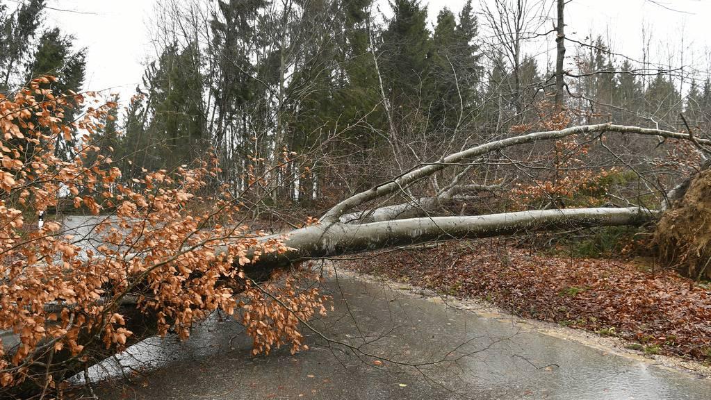 Sturm fällt Baum