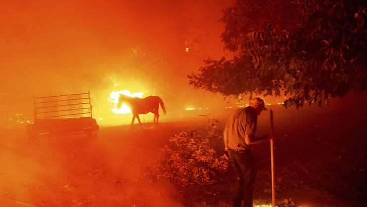 dpatopbilder - Der 84-Jährige Bill Nichols versucht sein Haus vor den Flammen zu retten. In Kalifornien kämpfen mehr als 10 000 Feuerwehrleute gegen zwei Dutzend Großbrände an. Foto: Noah Berger/AP/dpa
