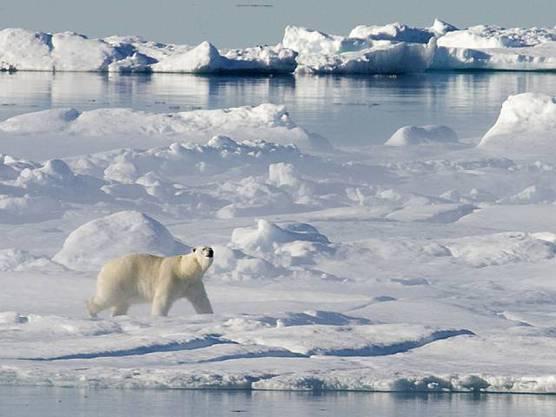 Der Flug an den Hotspot der Klimaerwärmung sorgte bei Klimaforschern für hitzige Gemüter.