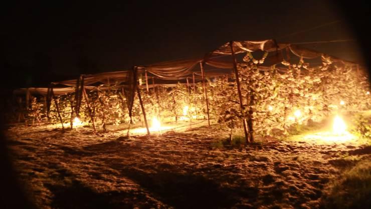 In Aesch kämpft Landwirt Franz Mörgeli mit Frostkerzen gegen die Kälte.