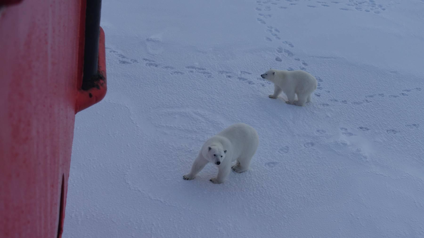 Mosaic-Expedition Arktis - Mauro Hermann
