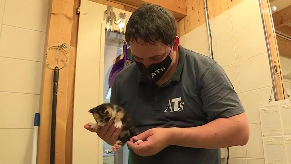 Kitten Rettung / Berner Tauben