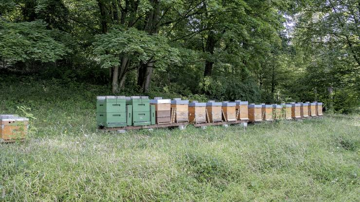 Die Bienen hausen am Waldrand auf dem Friedhof Hörnli.