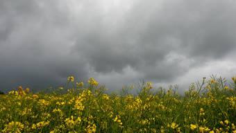 Sommerstimmung mit Wolken vor und nach einem Regenguss.