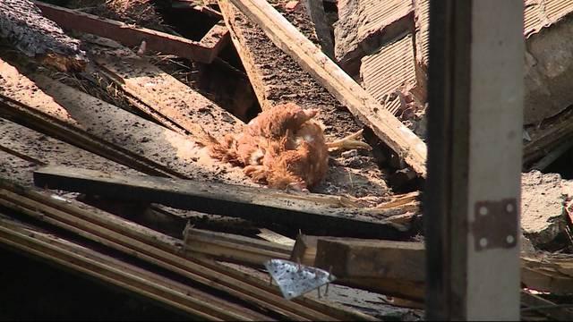 Lebenswerk zerstört: Bei dem Brand in einer Hühnerfarm in Veltheim sind 6300 Hühner ums Leben gekommen.
