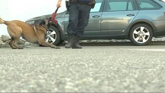 Ein Auto wollte sich am Sonntag in Flumenthal einer Polizeikontrolle entziehen. Nach einer Verfolgungsjagd flüchteten die beiden Insassen zu Fuss weiter, doch Polizeihund Quma konnte einen der beiden Männer aufspüren.
