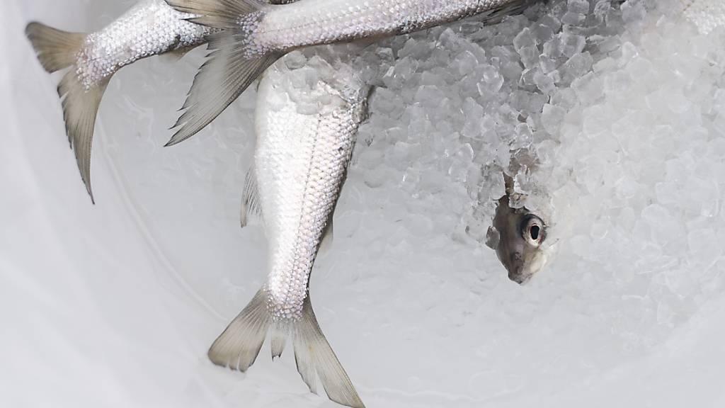 Mehr Erträge für weniger Berufsfischerinnen und Berufsfischer