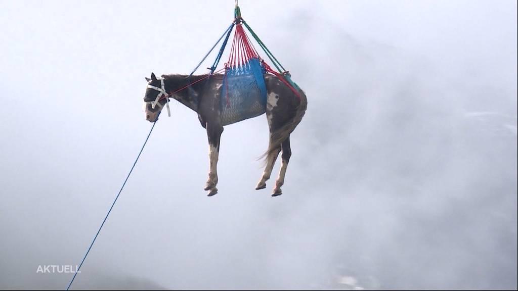 Spektakuläre Pferde-Rettung am Grimselstausee