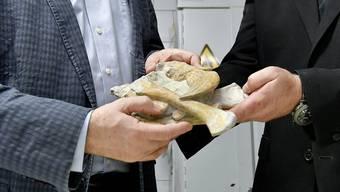 Freuen sich über den Neuzugang aus Frick: Christian Köberl (links), Direktor des Naturhistorischen Museums Wien, und Chefpaläontologe Mathias Harzhauser. HERBERT NEUBAUER/APA/Keystone