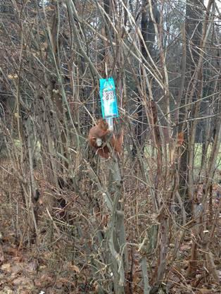 Regula Boutellier, Würenlos: Ein munteres Eichhörnchen