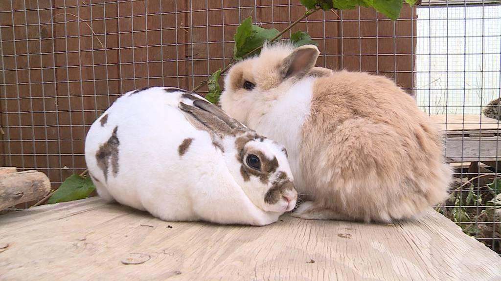 Tiere im Tierheim