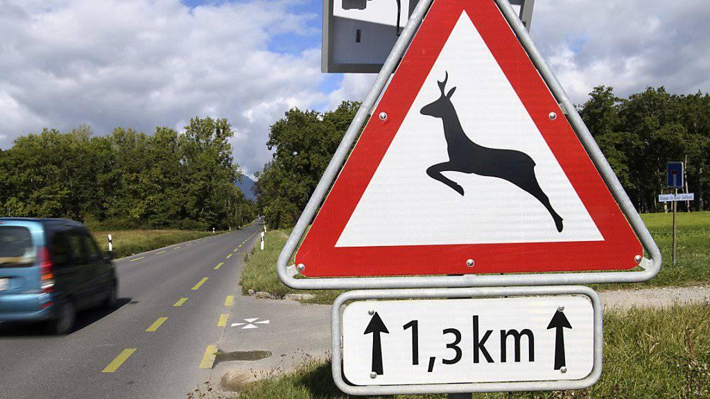 Viele Wild-Kollisionen im Bündnerland