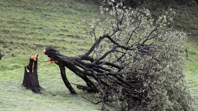 Baum nach einem Unwetter (Symbolbild)