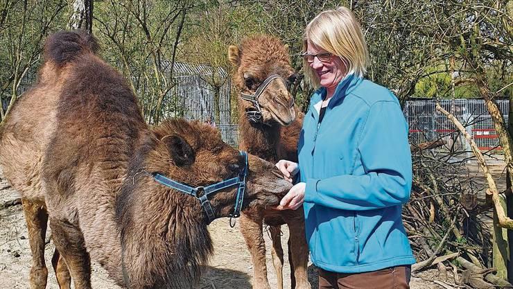 Zooleiterin Cornelia Da Silva versucht, sich bei den Dromedaren von ihren Sorgen abzulenken.
