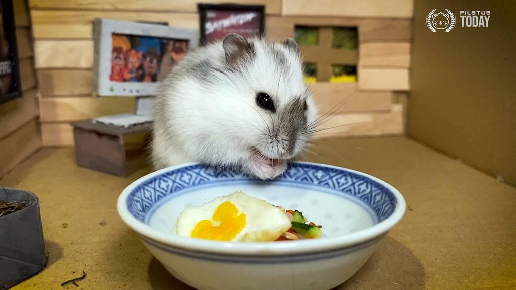 «Hamstermania» – Gib unserem Star von morgen einen Namen!
