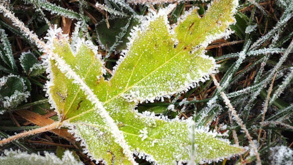 Mit tiefen Temperaturen und stellenweise Bodenfrost hat sich am Montagmorgen der Herbst angemeldet. Am Flughafen Zürich etwa wurden die tiefsten Temperaturen seit Ende Mai gemessen (Symbolbild)
