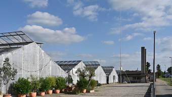 Das Bauprofil bei der alten Gärtnerei in Härkingen steht noch.