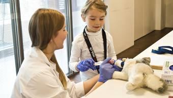 Vier Kindergartenklassen besuchen das Teddybär-Spital.