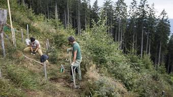 Freiwillige Helfer pflanzen im Kanton Luzern Jungbäume in einem Schadengebiet des Orkans Lothar. Vor 20 Jahren warf der Sturm über zehn Millionen Bäume wie Dominosteine um.