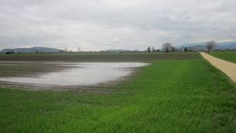 In weiten Teilen der Witi steht das Kulturland buchstäblich unter Wasser.