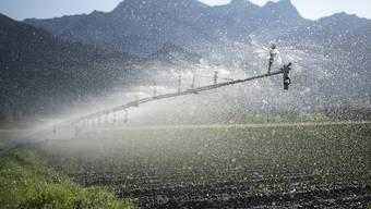 In Bad Ragaz SG wird ein trockenes Feld mit Winterzwiebeln bewässert.