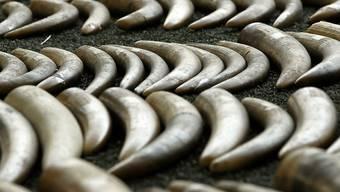 Elefanten werden vor allem wegen der Stosszähne aus Elfenbein gejagt und getötet. (Symbolbild)