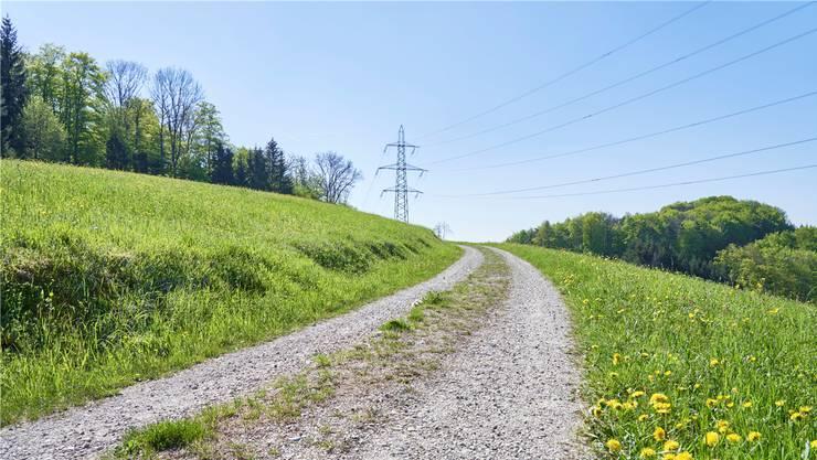 Das Ende des Zwäreweges in Gansingen führt aus dem Wald in offene Wiesen und bietet eine schöne Aussicht.