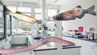 Fische und Regenwürmer werden im Labor für die Versuche verwendet.
