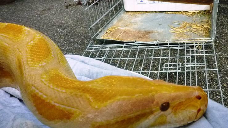 Eine der entdeckten Schlangen.