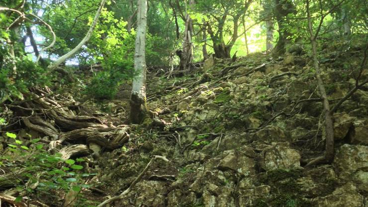 Die Absturzstelle in der Nähe des Cheisacherturmes im Fricktal.