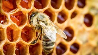Bis die Honigsaison vorbei ist, können die Waben nicht gegen Schädlinge gespritzt werden.