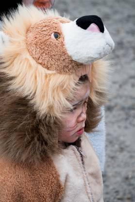 Selbst mutige Löwen waren vom grossen Aufmarsch etwas überwältigt