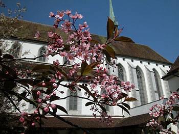 Klosterkirche Königsfelden