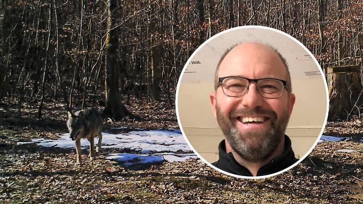 Thomas Stucki, Leiter der Sektion Jagd und Fischerei: «Der Wolf ist ein eher scheues Tier, das Menschen meidet.»