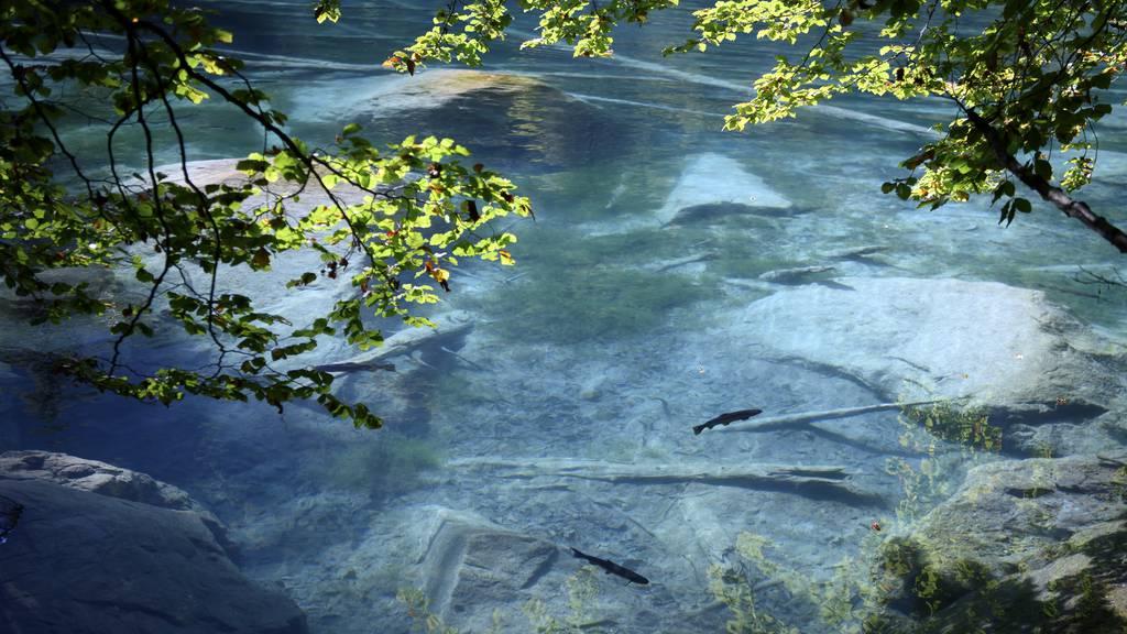 Umweltskandal im Blausee?SP Kanton Bern verlangt eine PUK
